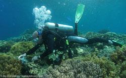 BD-060409-Moalboal--Homo-sapiens.-Linnaeus.-1758-[Diver].jpg